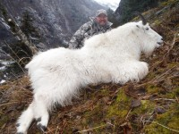 Mountain Goat 2014 - Mountain Goat 2014